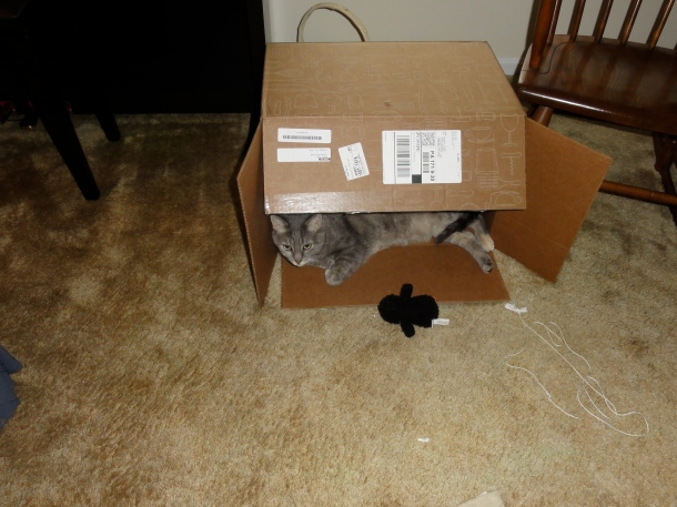 Siobhan loves her box.